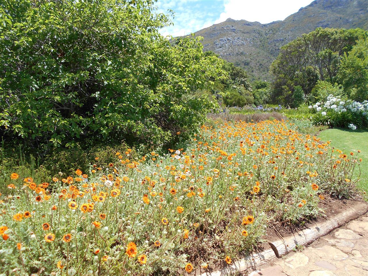 Cape Town, South Africa - summer flowers in Kirstenbosch Botanical Gardens
