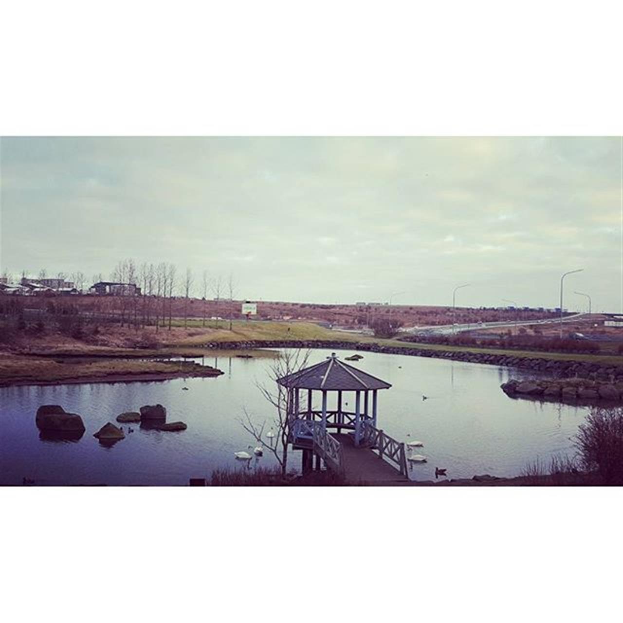 K¾pavogstj÷rnin, alltaf gaman a gefa ÷ndunum brau. The pond at K¾pavogur.  #k¾pavogur #k¾pavogstj÷rn #leadingrelocal