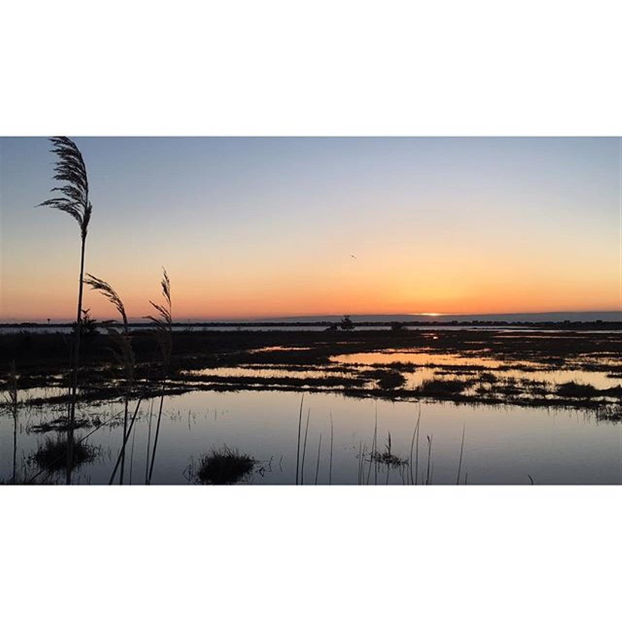 Sunrise of the marshes of Barnegat Bay, New Jersey