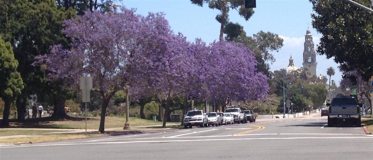 Balboa Park in Bloom, San Diego
