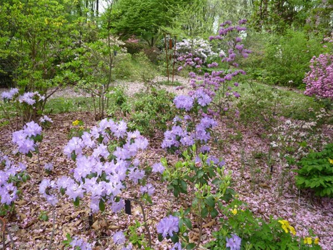 #LeadingRELocal Jenkins Arboretum, Devon PA a great place to enjoy nature