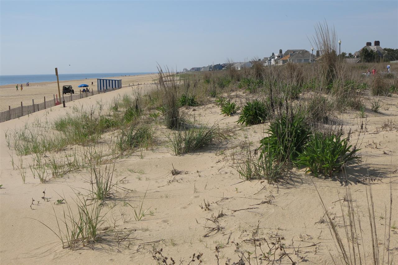 Rehoboth Beach Delaware  - Beach Dunes