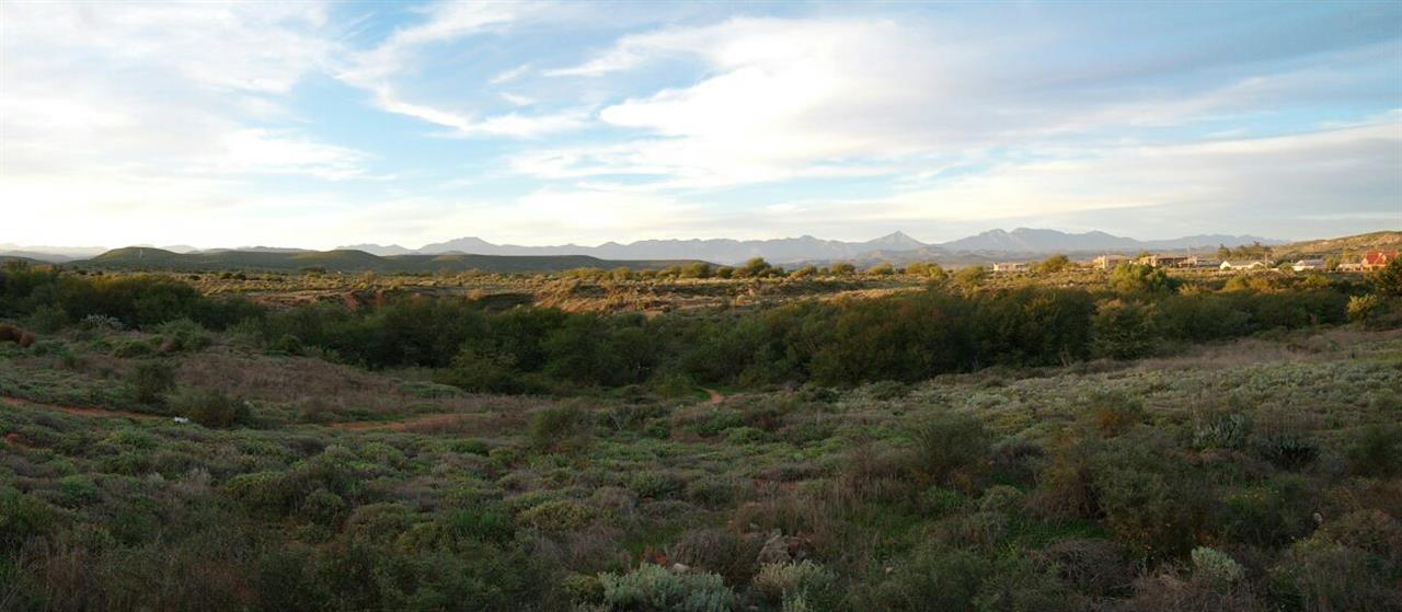 Karoo veld in Oudtshoorn.