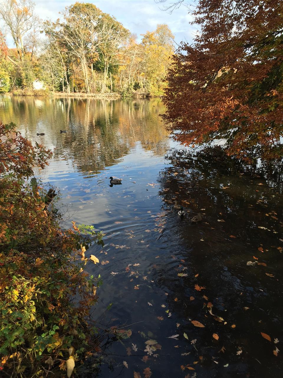 Avalon Nature Preserve in #StonyBrook #NewYork