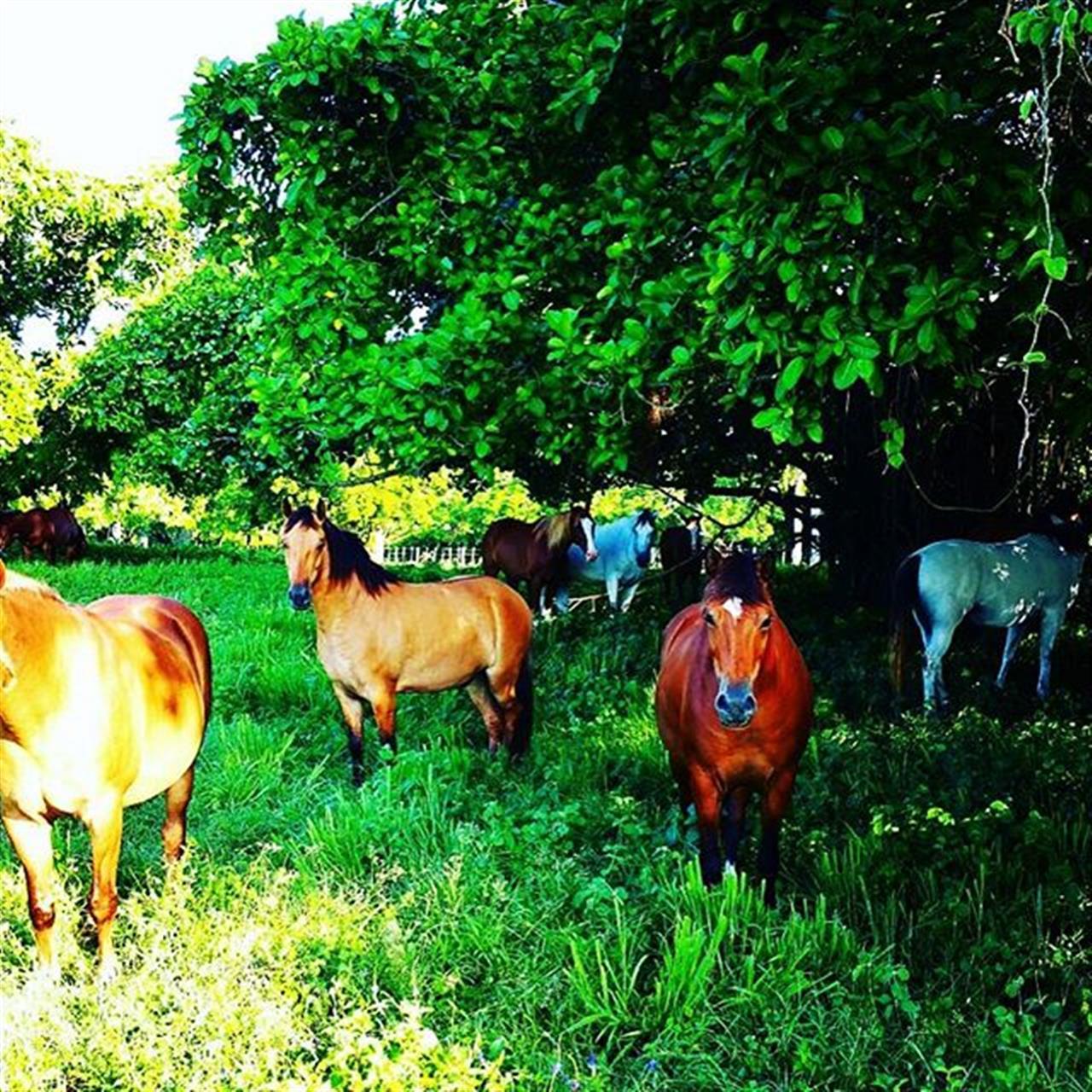 Happy Horse Family ????? #dominicanrepublic #happy-horses #horsefield #Northcoast #leadingrelocal #horsebackriding