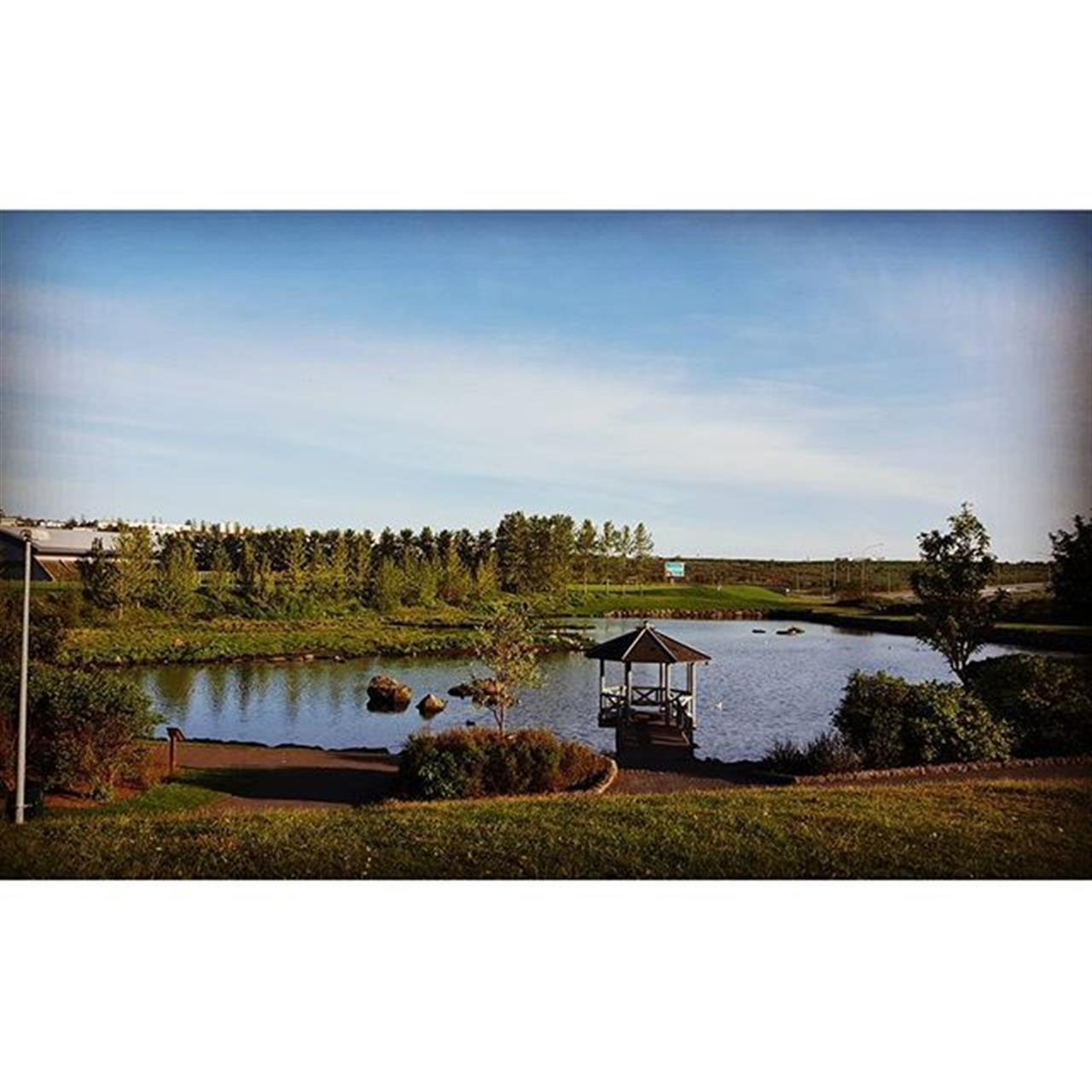 K¾pavogstj÷rni . #nature #nattura #tj÷rn #pond #water #vatn #fuglalif #birds #peace #ro #leadingrelocal #leadingre
