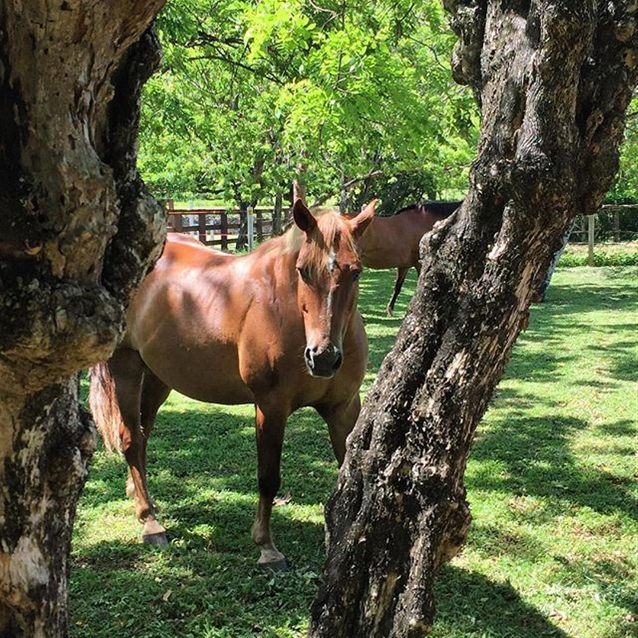 Equestrian Center at Sea Horse Ranch ????? #DominicanRepublic