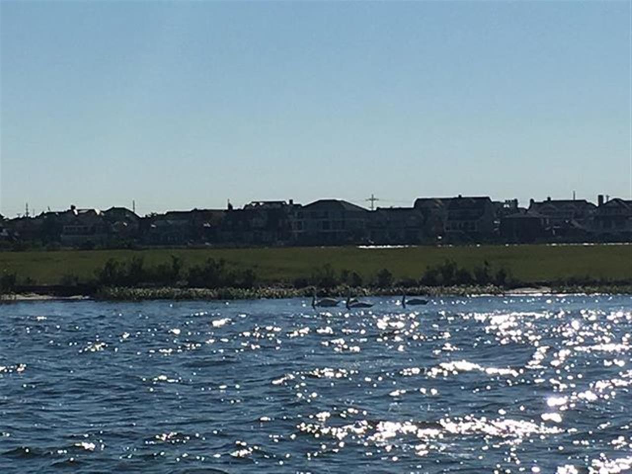 The swans of Herring Island... #birds #boats #nj #goodmorning #jshn #leadingrelocal