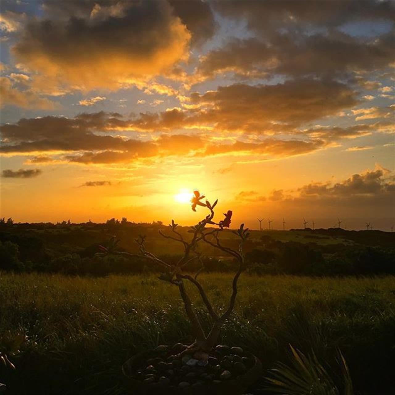 Sun kissed sky for the #4thofJuly!!! ???????? #derbyfarm #sunsets #kohala