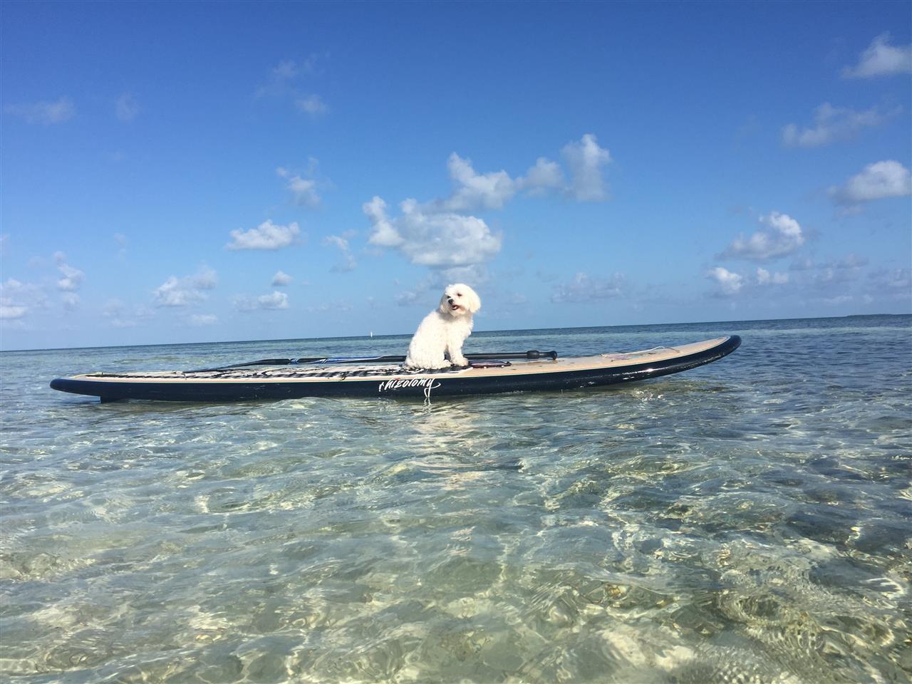Dog Days of the Florida Keys