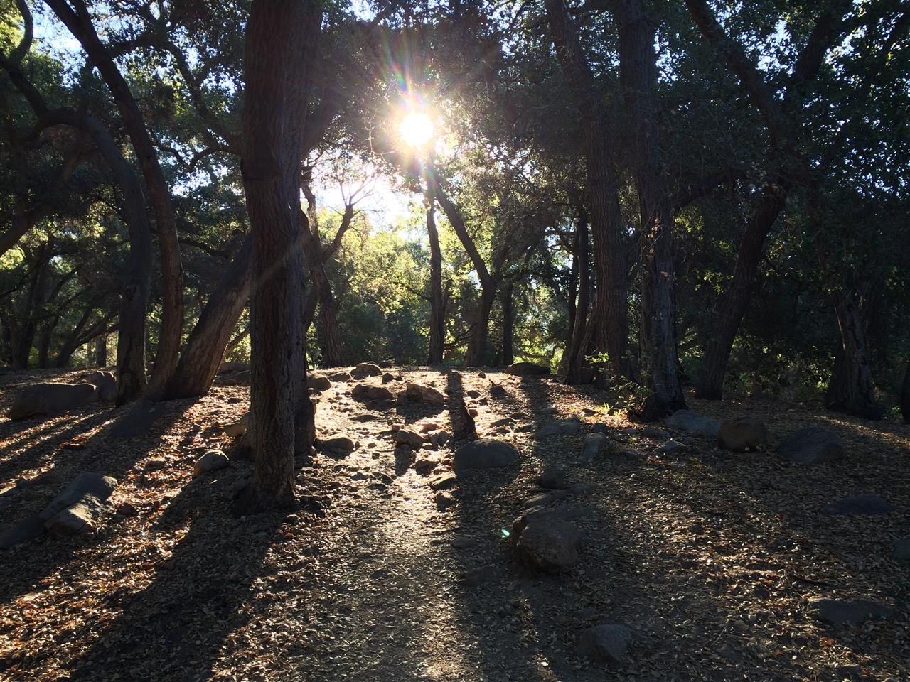 Sunrise on a Hiking Trail in Crescenta Valley Park, La Crescenta CA