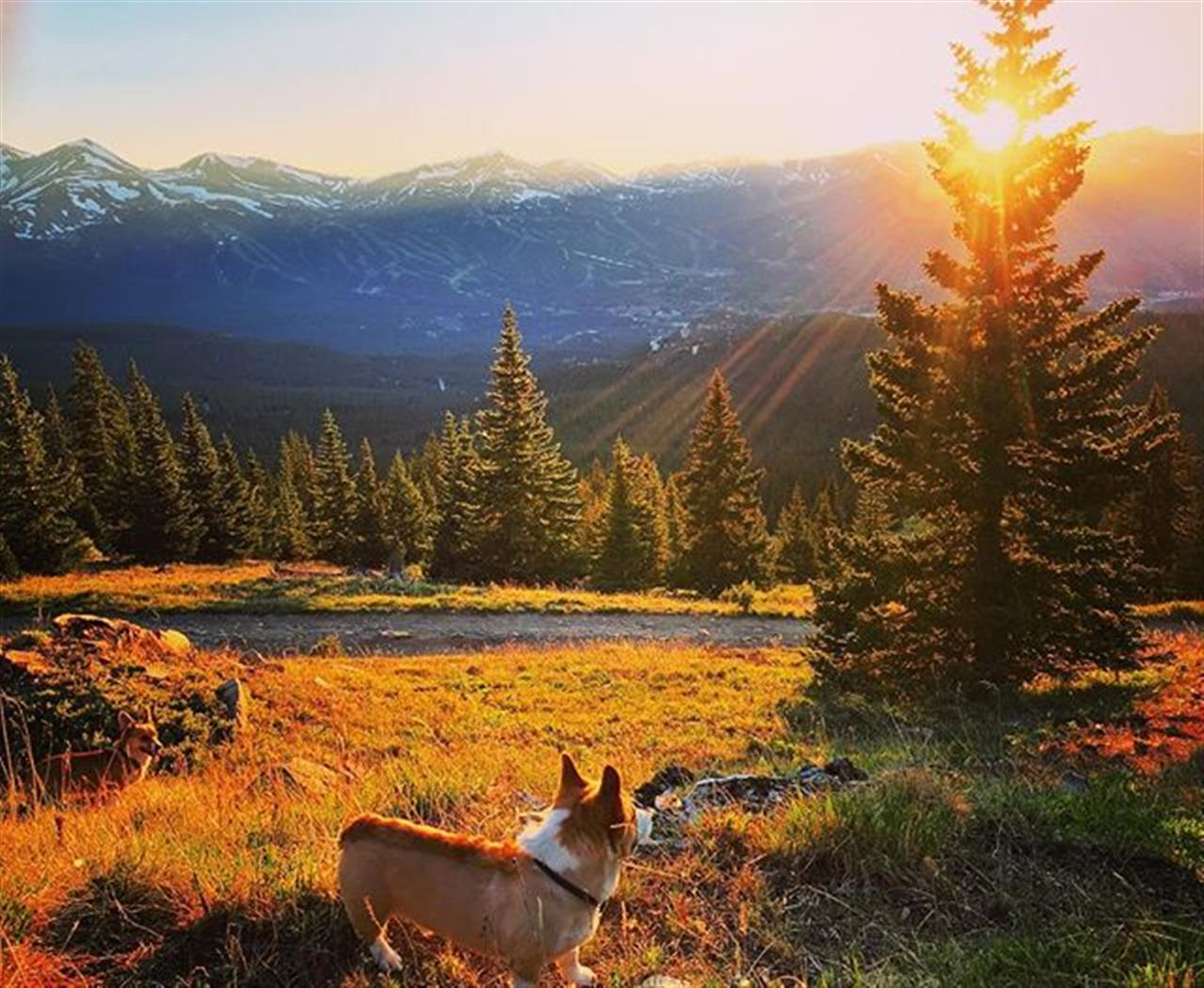 Does it get more majestic? #summersunset #breckenridge #coloradophotography #hardcoreparcorgi #iphoneonly