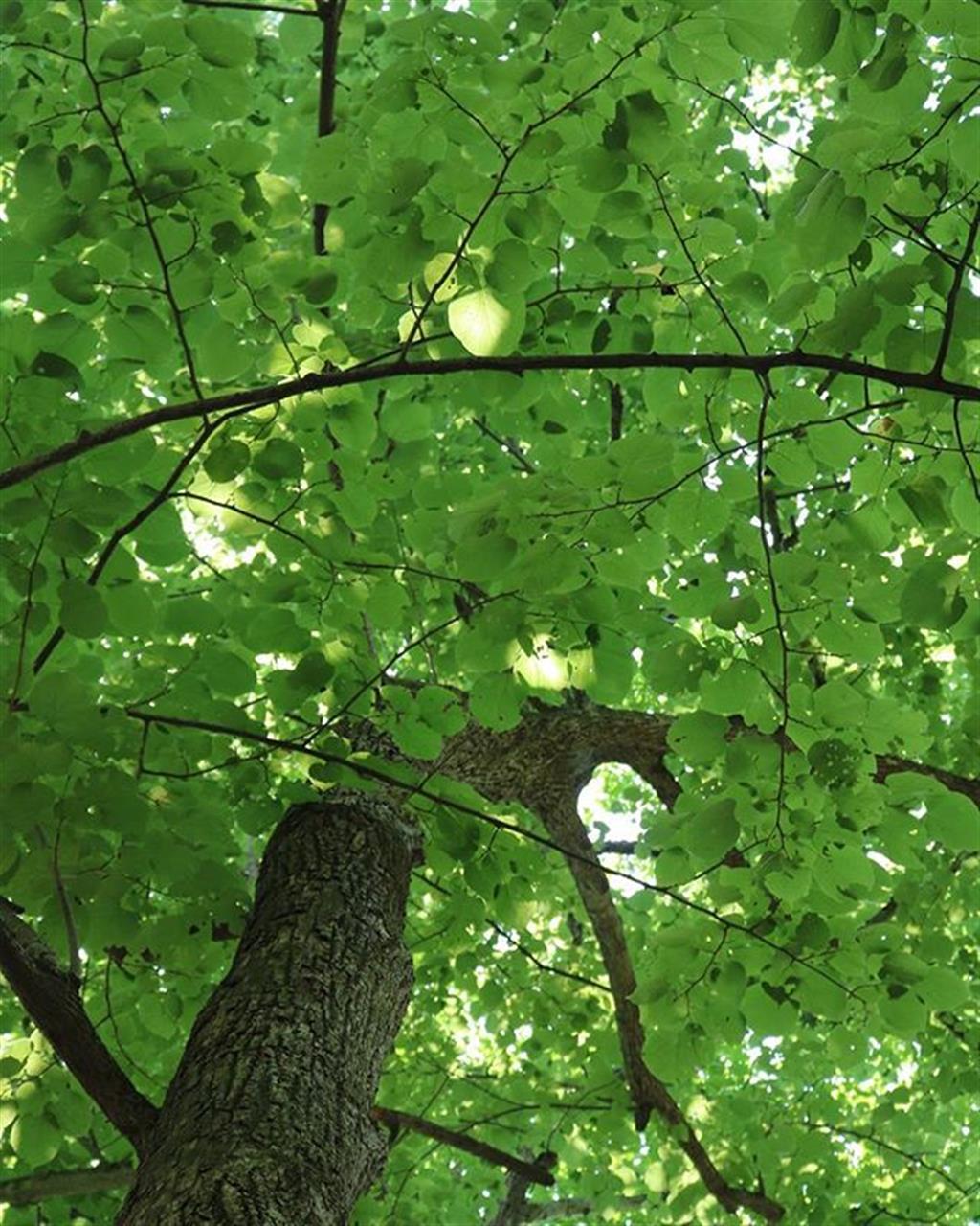 #tremanparkfalls #trees #leaves #ithaca l