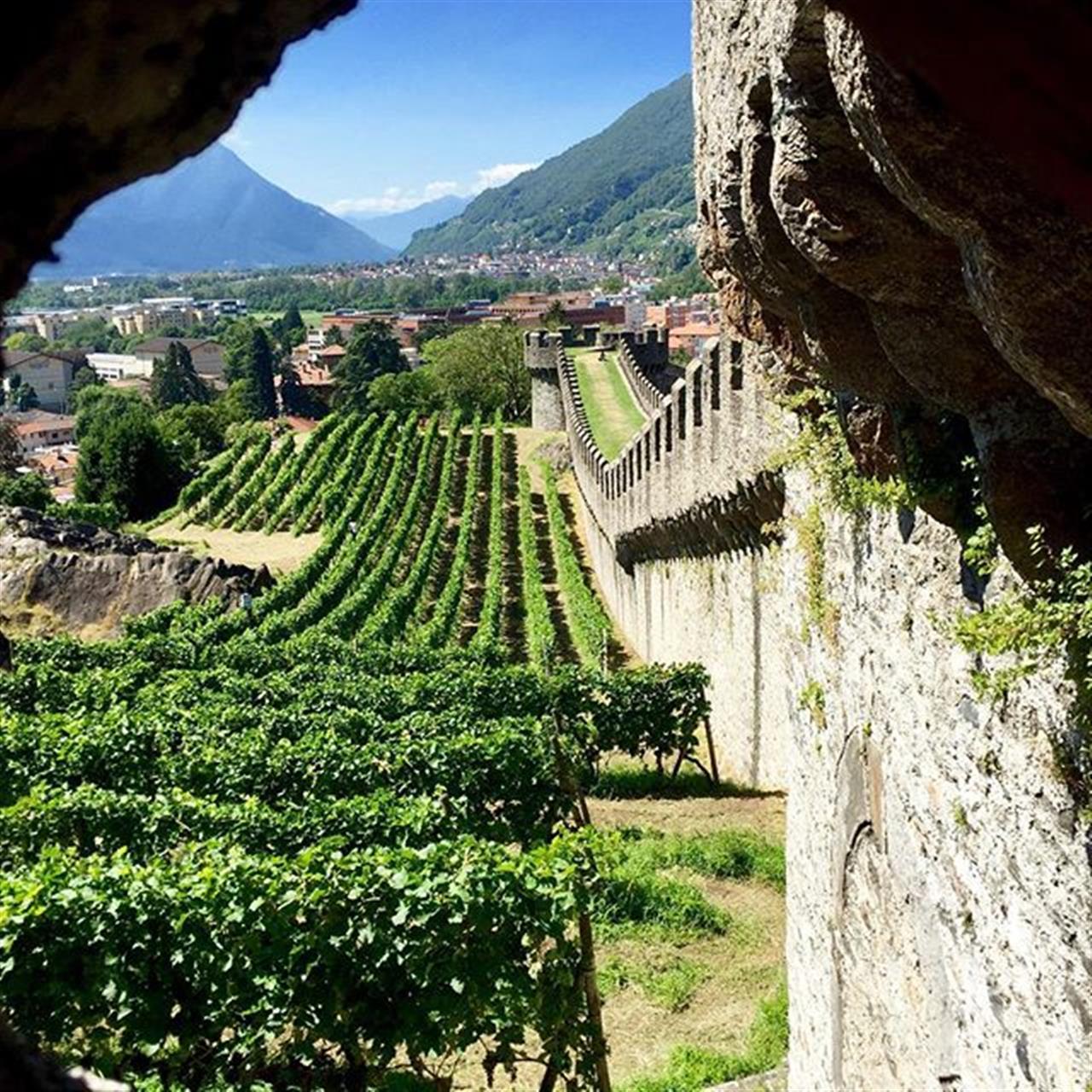 View on vineyards Castelgrande Bellinzona. Ticino, Switzerland #lakemaggiore #ticino #switzerland