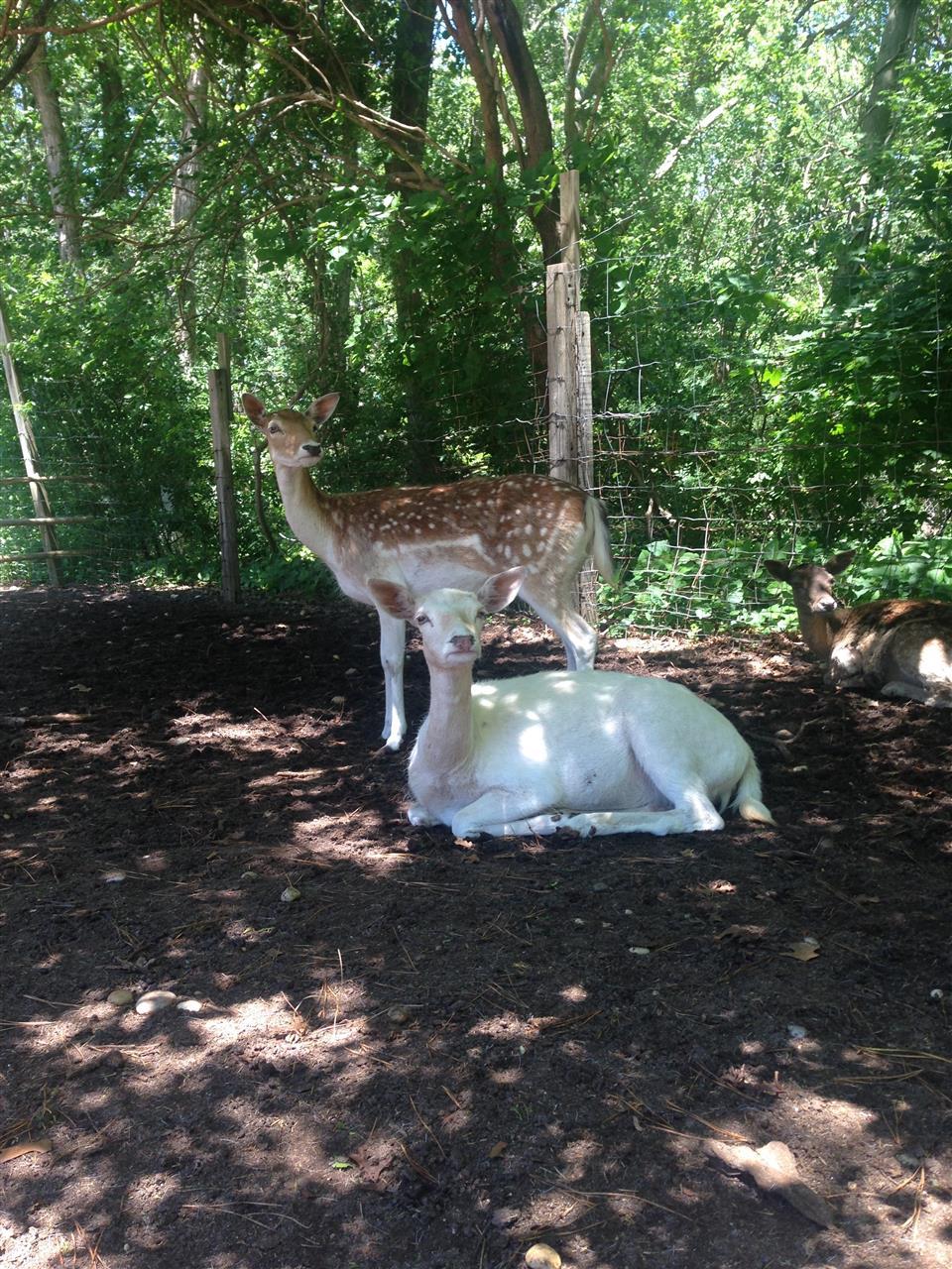 #Deer #LongIsland