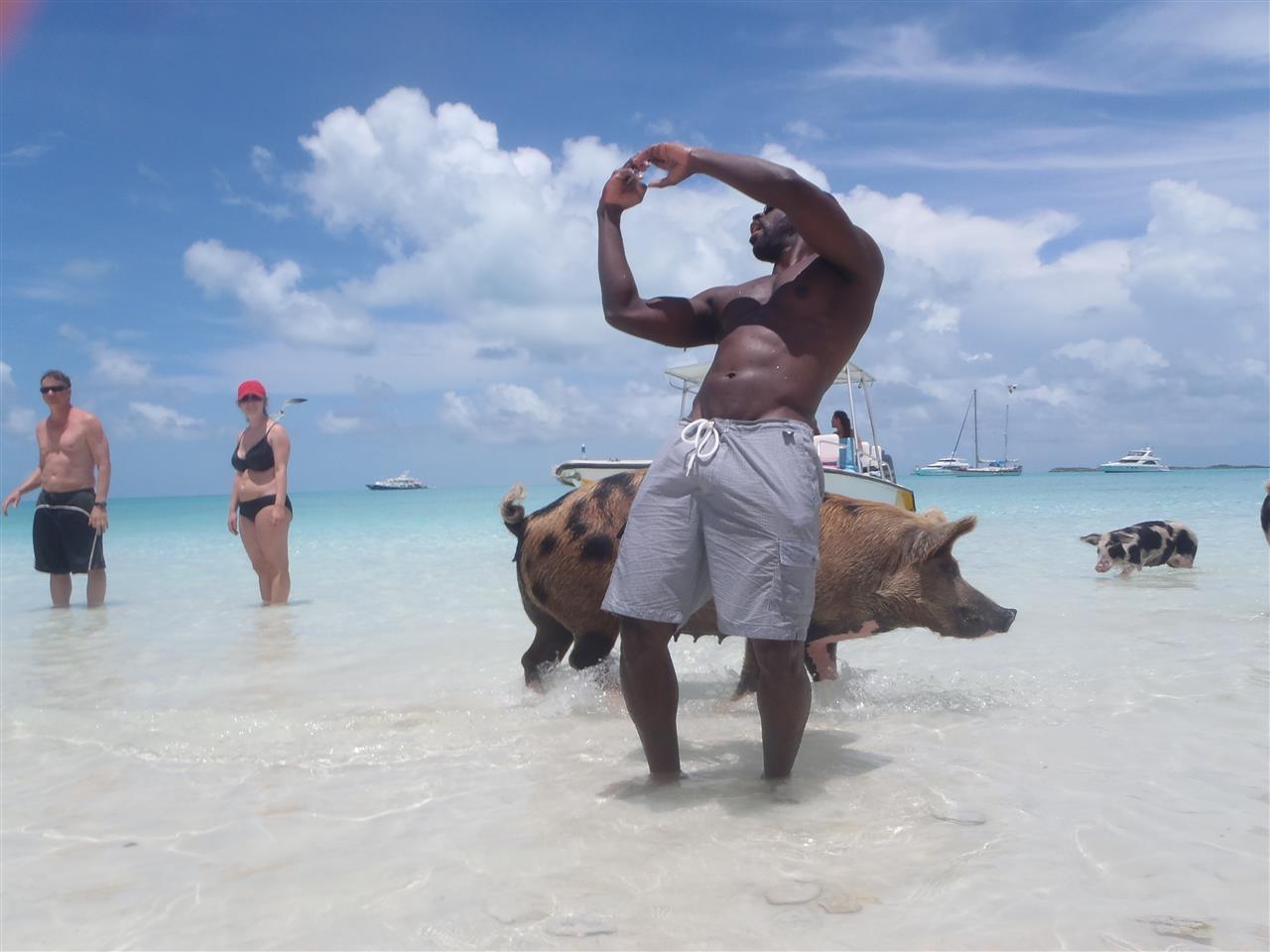 Pig Selfie