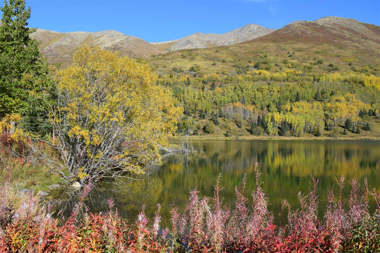 Autumn Splendor. Eagle River, Alaska on a private homestead property.