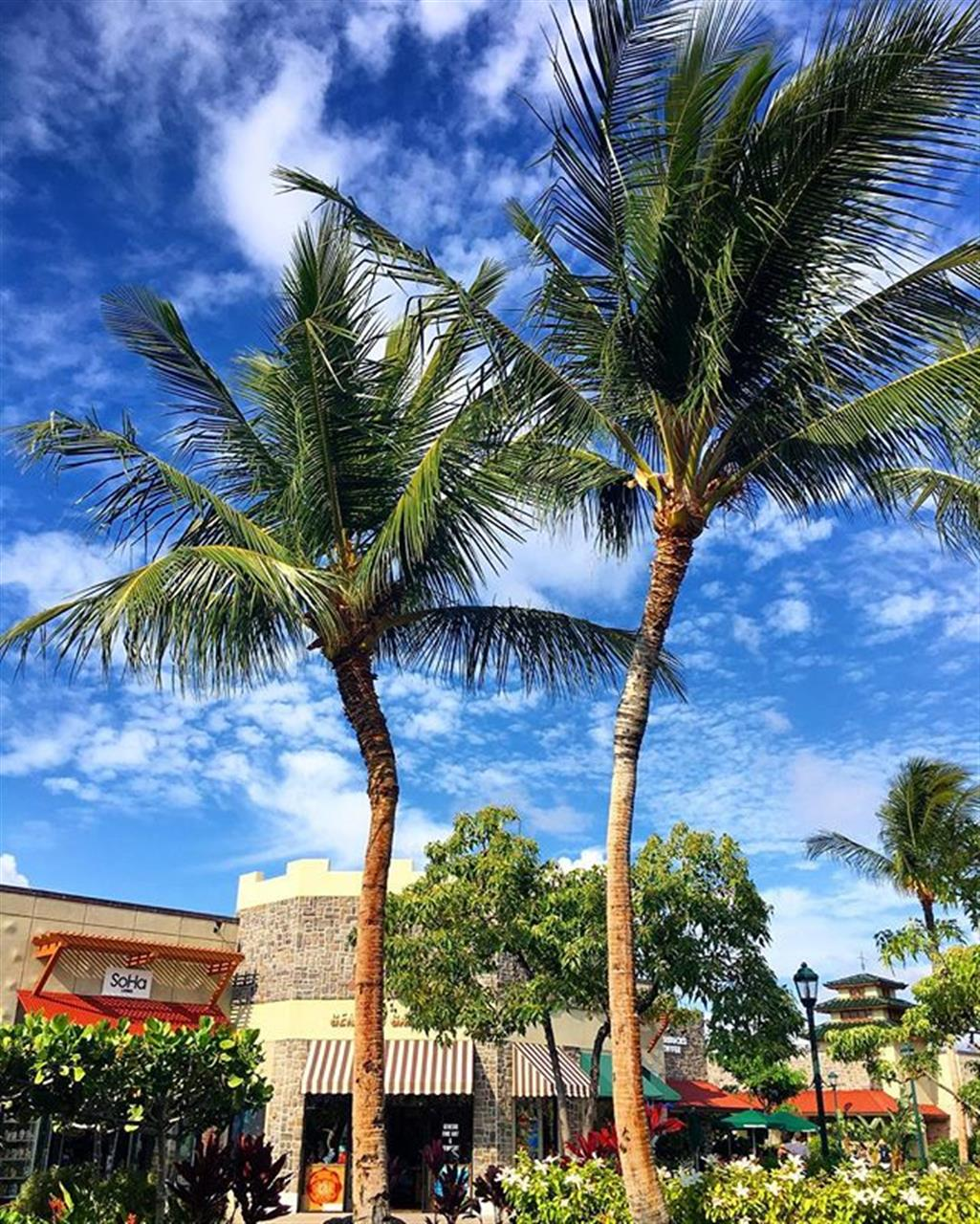 There's something about a #palmtree...has such a calming effect over me! #queensmarketplace #kohalacoast #waikoloa