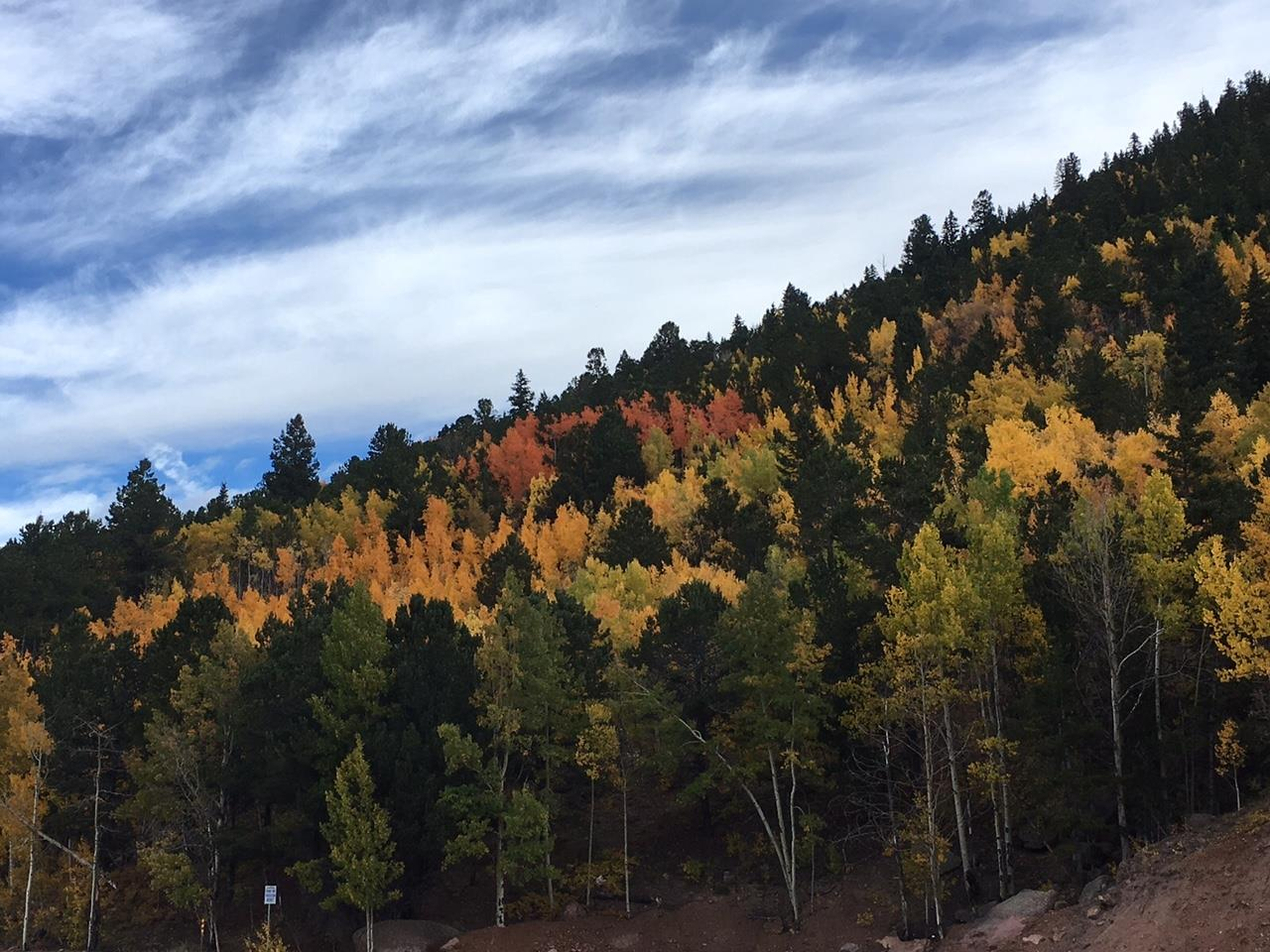 Fall colors in Divide, CO