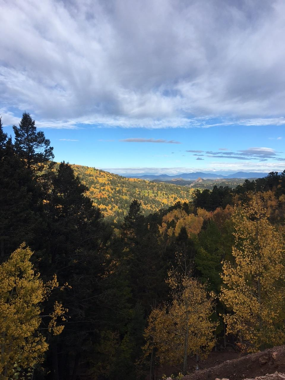 Leaves changing in Divide, CO