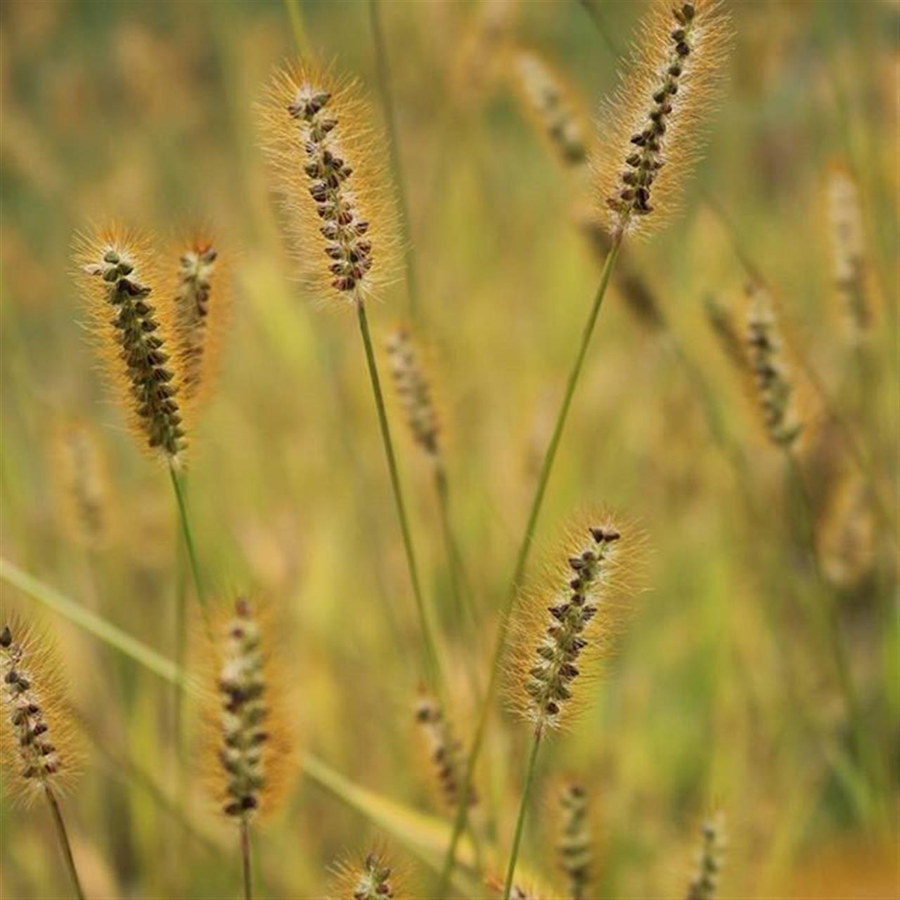 #upstateny #stuartsapplefarm  #grass