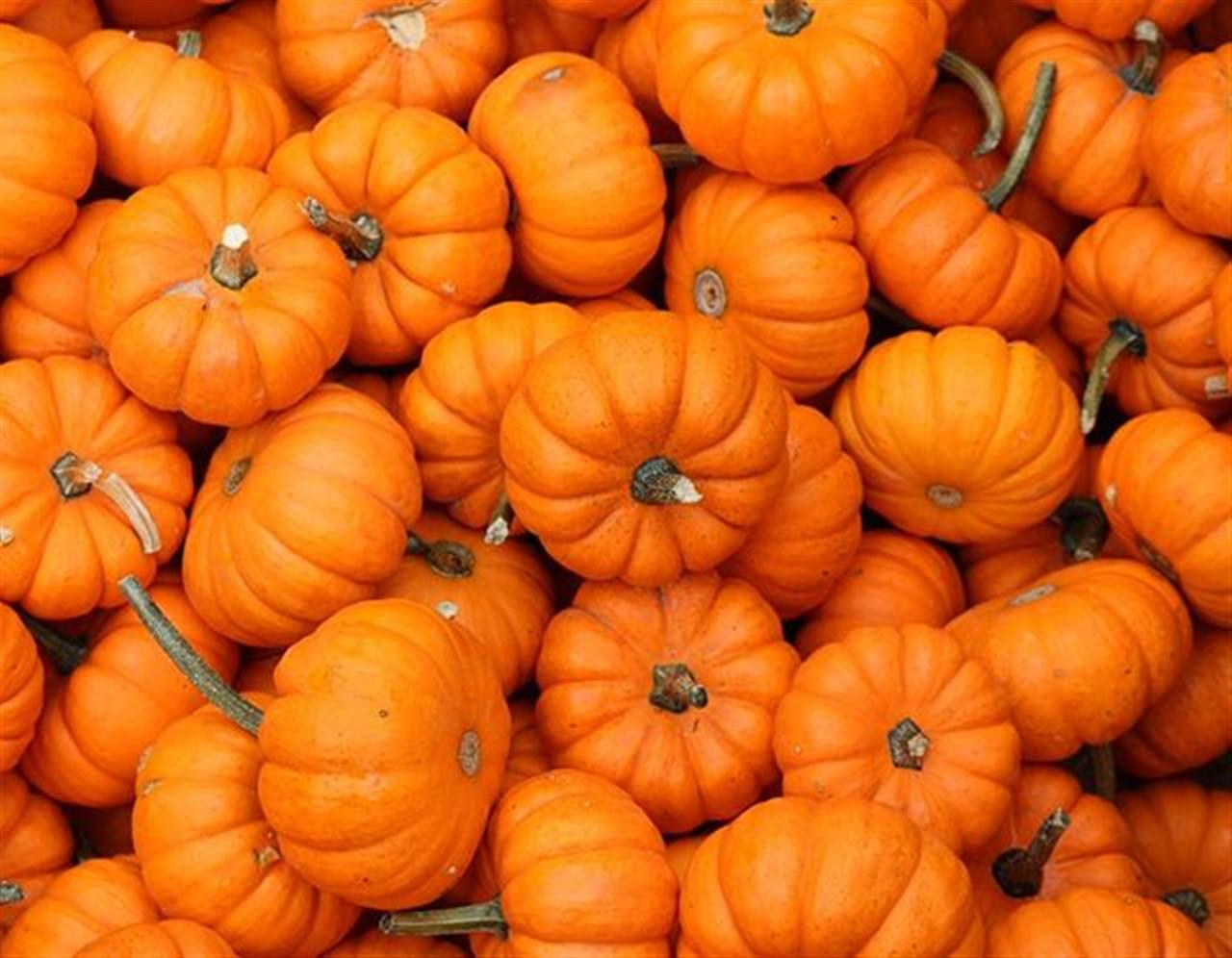 #pumpkins #stuartsapplefarm #upstateny