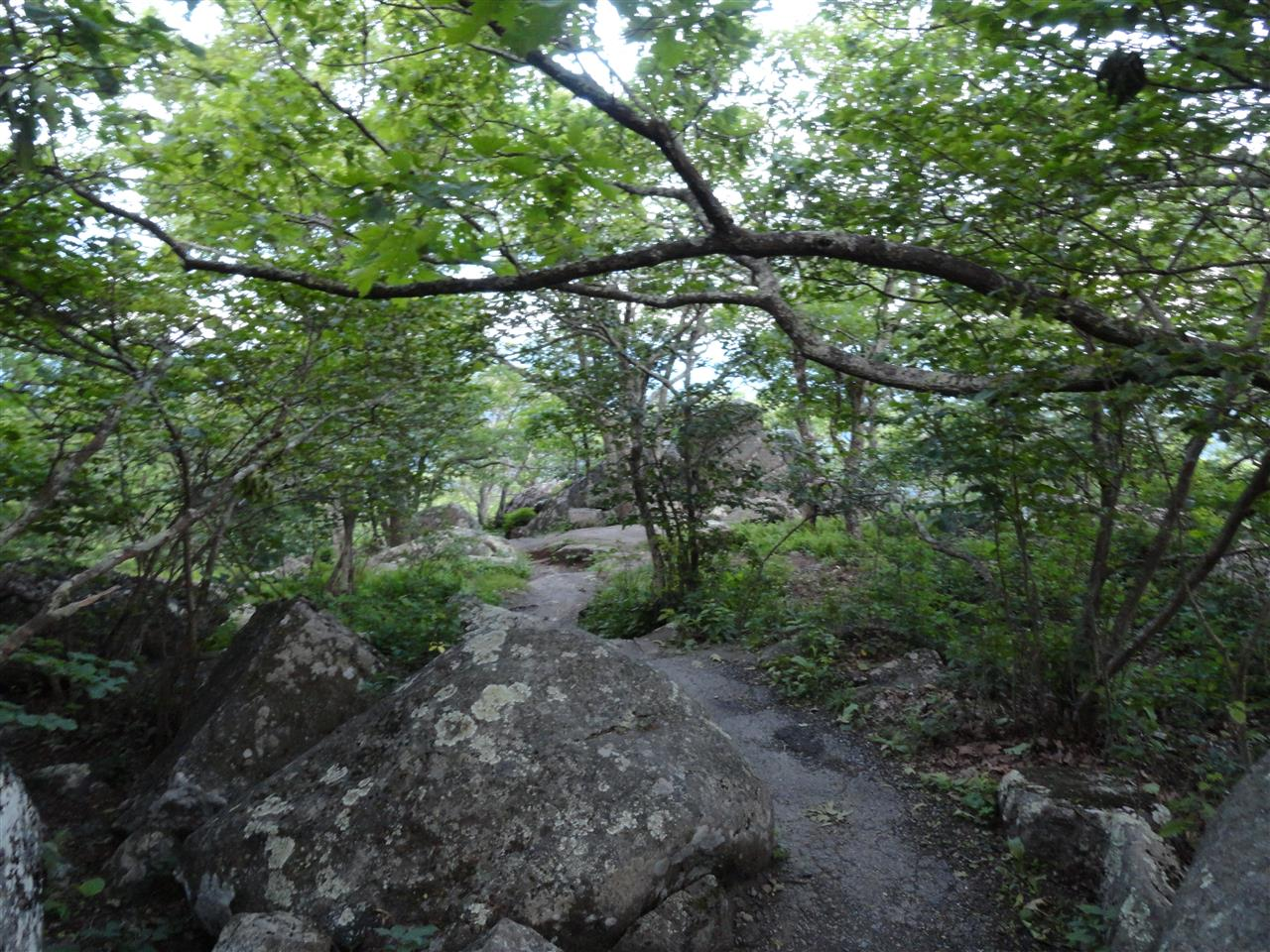 Trail to Buzzard's Roost, Bedford, VA