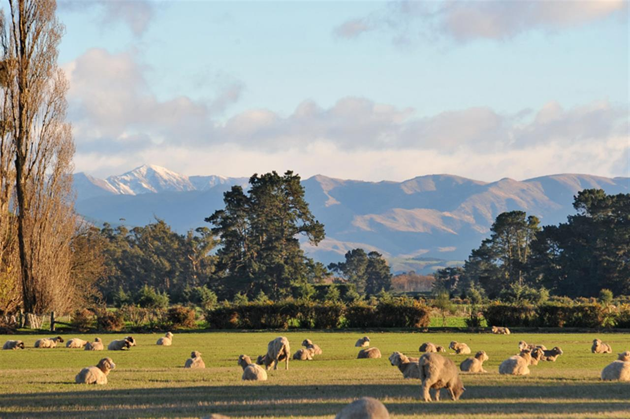 Rangiora, South Island, New Zealand
