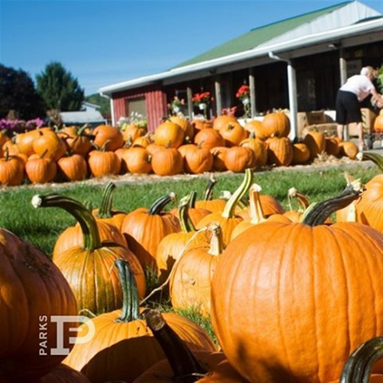 Don't forget! Tomorrow is Pumpkinfest 2016 in Downtown Franklin from 10am-6pm and is one of the most popular events on Main Street. Costume contests, pumpkin carving, food trucks, photo ops and more! ??? #pumpkinfest2016 #parksonmain #visitfranklin #discoverfranklin #leadingrelocal