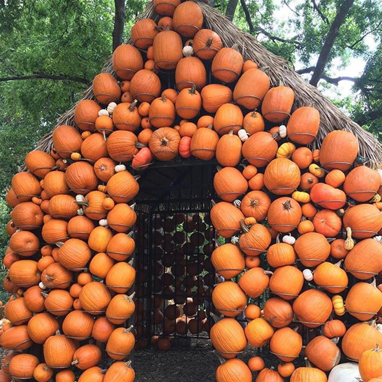 Visit @cheekwood for Cheeckwood Harvest and enjoy a celebration of all things fall for the whole family! ? #cheekwoodharvest #fall #autumn #middletennessee #parksathome