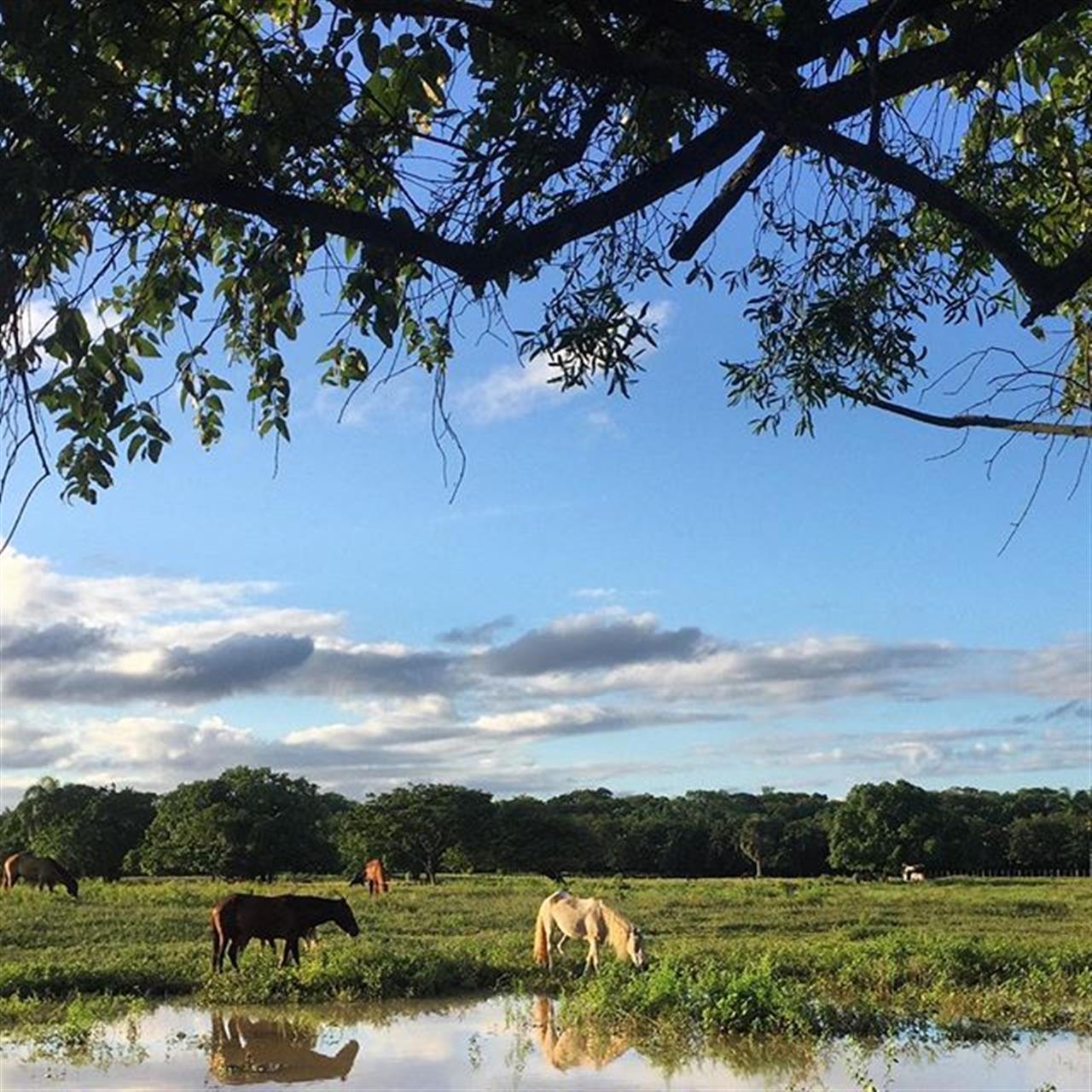 Happy Horses ? #horses #lovehorses #Caribbean #farmlife #farmhousestyle #farm #leadingrelocal www.selectcaribbean.com