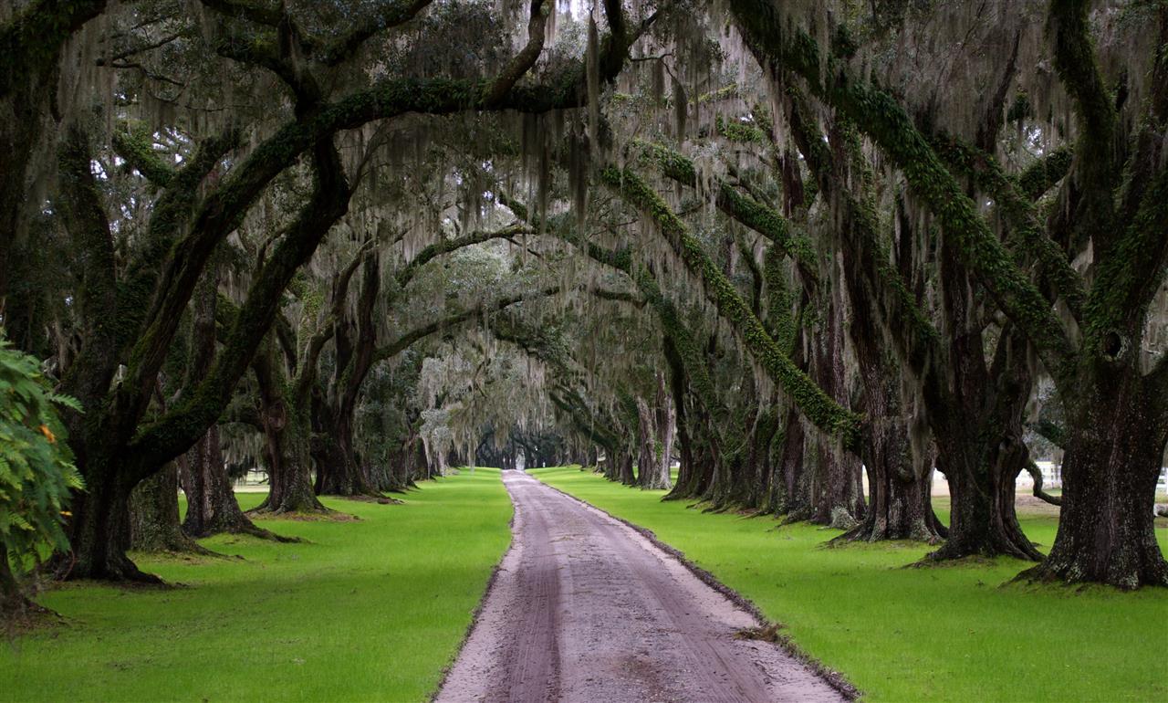 Beautiful oaks, Beaufort, SC