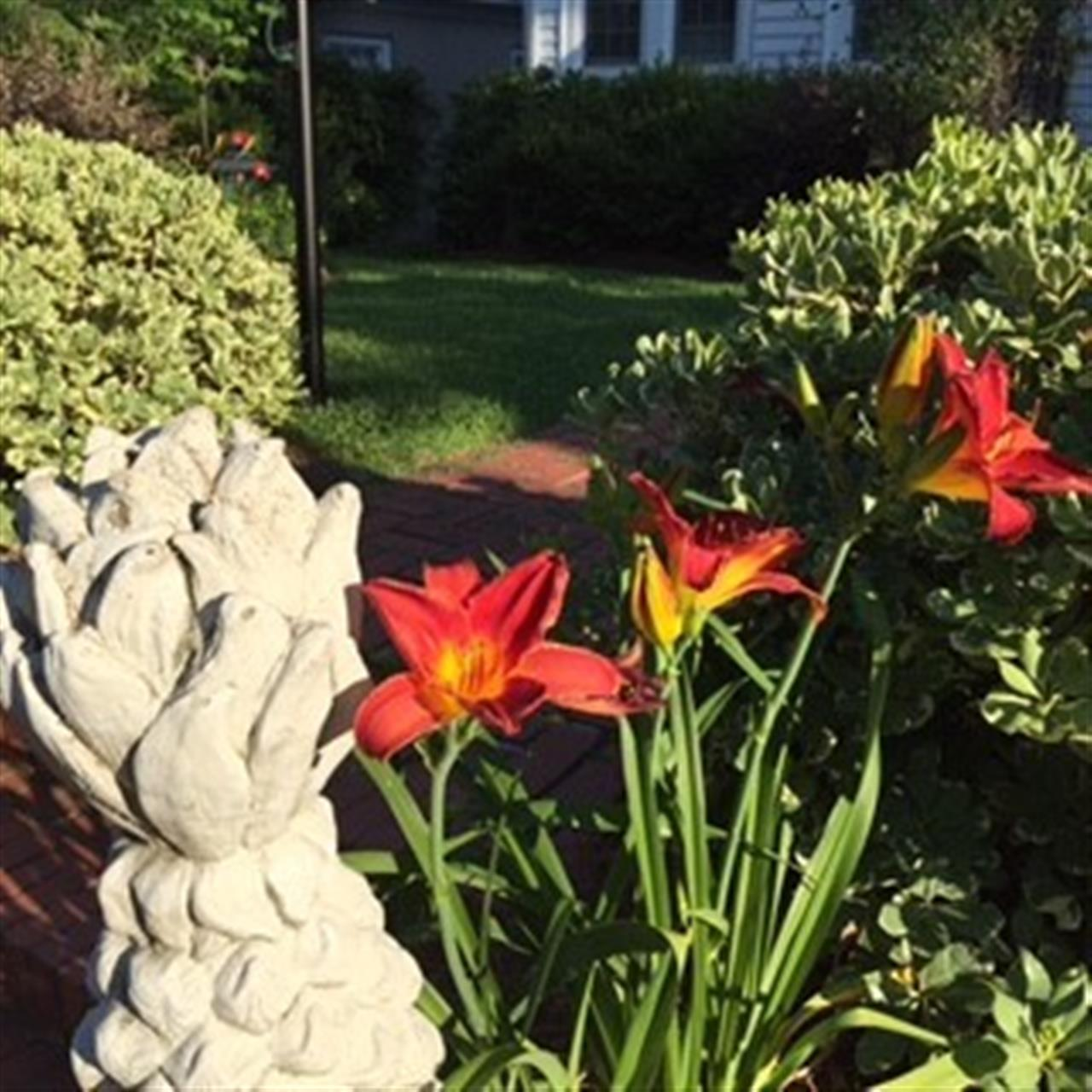 Daylilies.  Submitted by Townsend Real Estate.