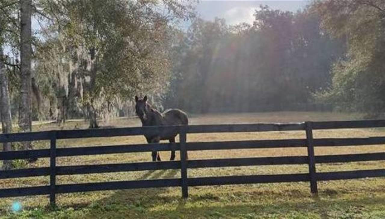 Want to go for a ride? Marion County Horse Country