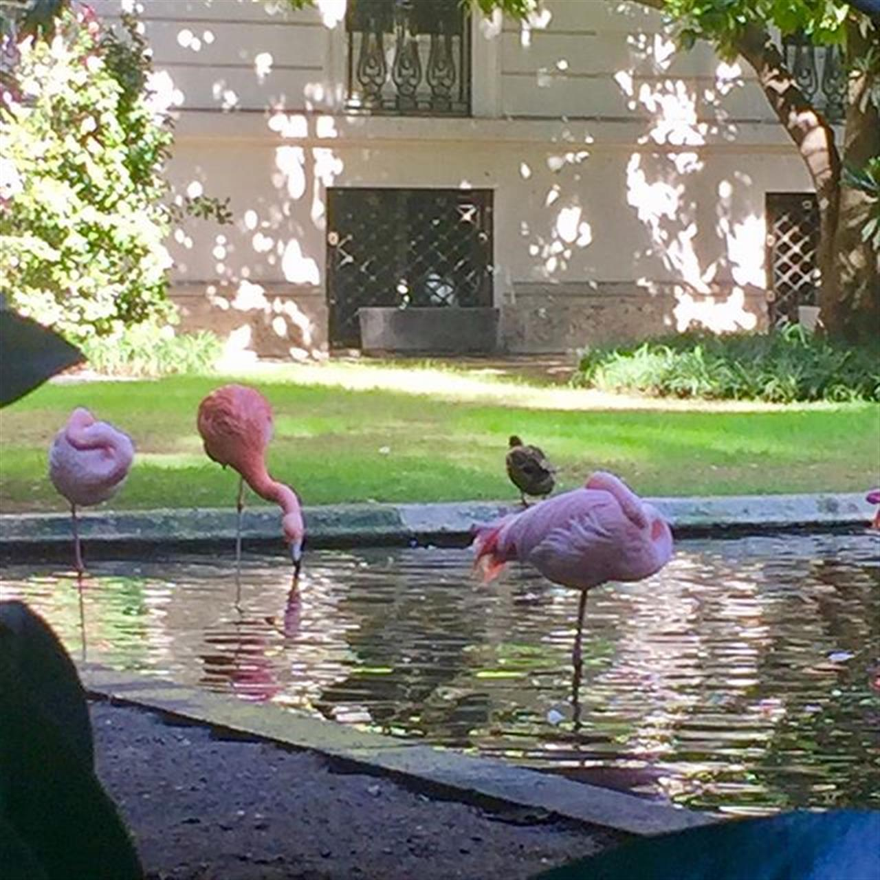 Pink #flamingos in #milan city center! #milano #homehunting #leadingrelocal #special #villainvernizzimilano #solocosebelle #citycenter #thingstodo #thingstovisit #giorgioviganorealestate