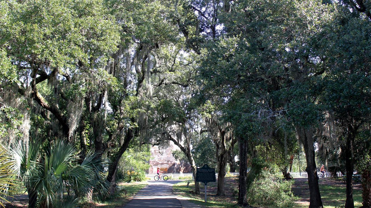 Canopy trees and Spanish moss around ever turn.