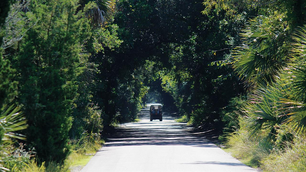 Federal Road provides a tunnel made from the Maritime Forest.