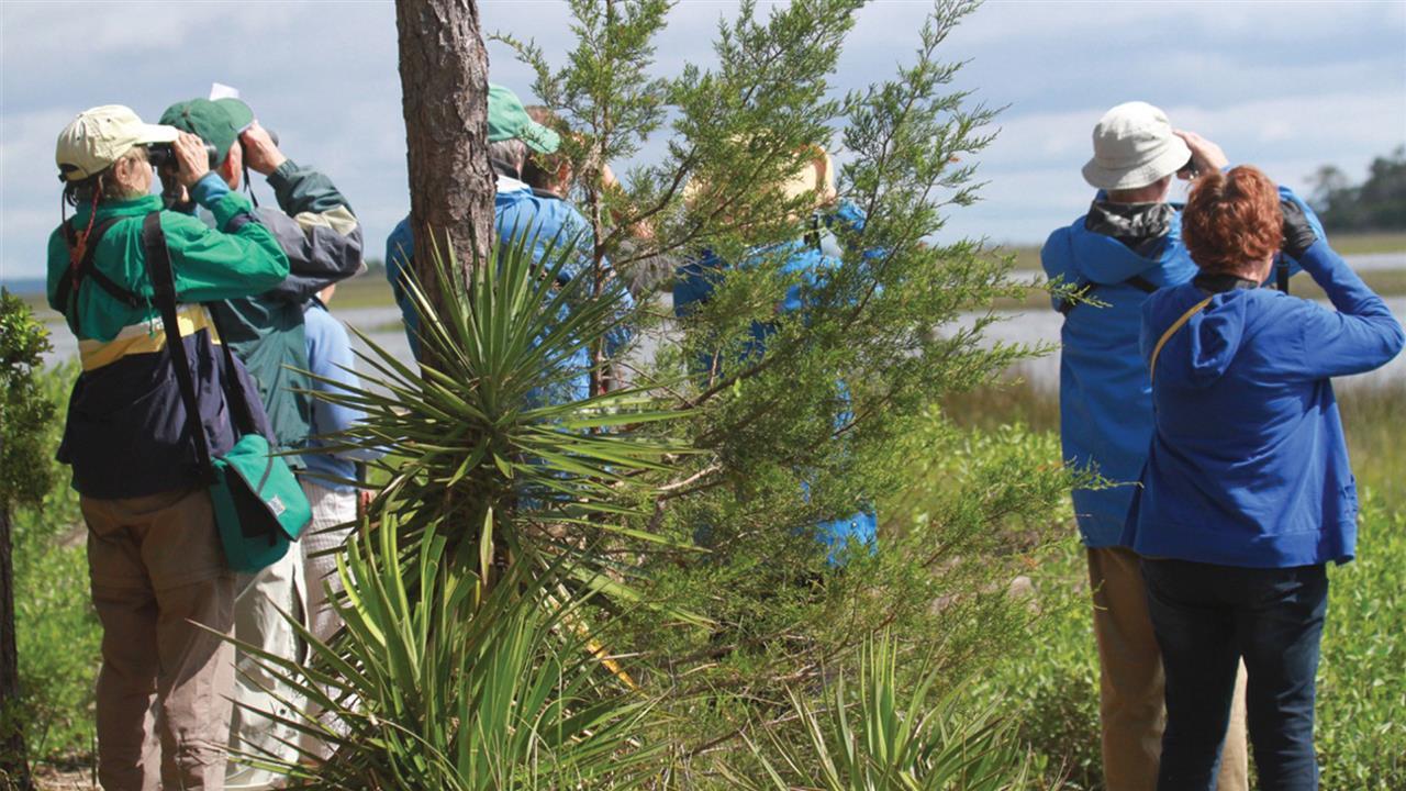 Take a birding tour with the Bald Head Island Conservancy.