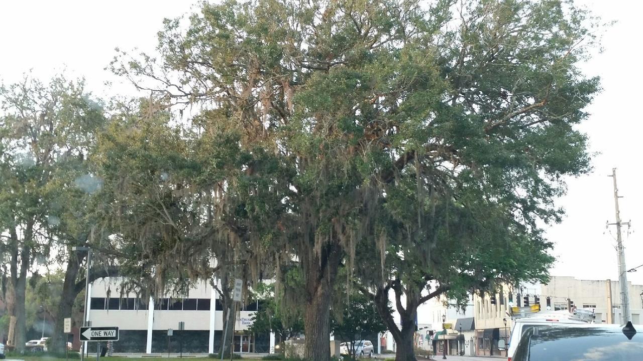 Area: Brooksville, FL Agent: Tracy Echols