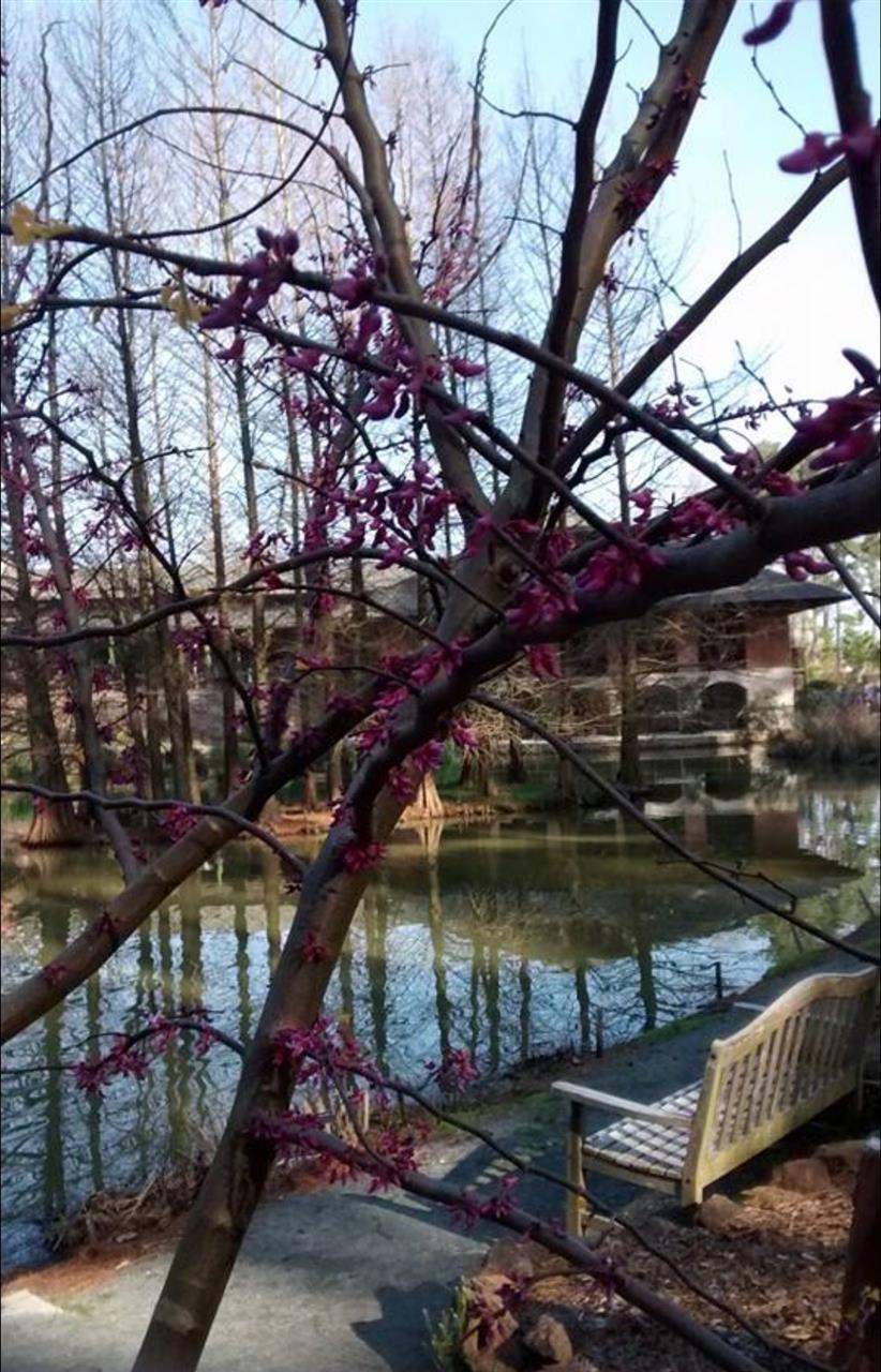 Cape Fear Botanical Garden in Fayetteville, North Carolina.  Submitted by Kimberly Pruitt.