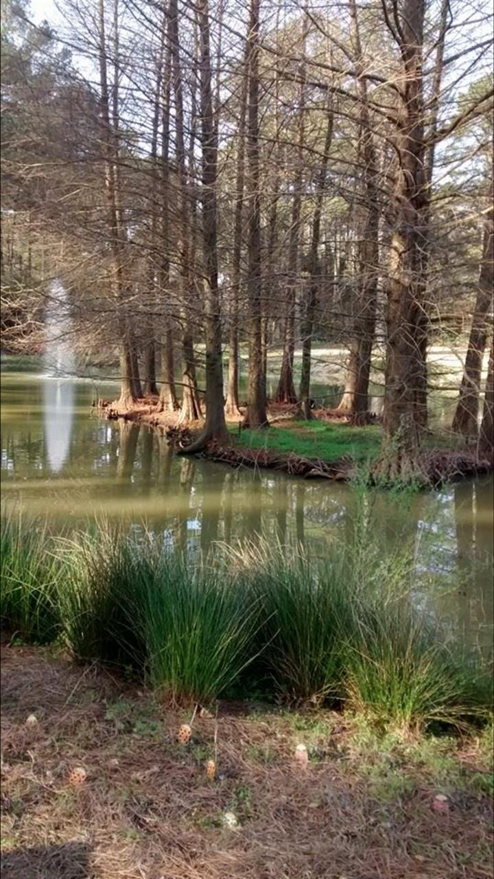 The Cape Fear Botanical Garden in Fayetteville, North Carolina.  Submitted by Kimberly Pruitt.