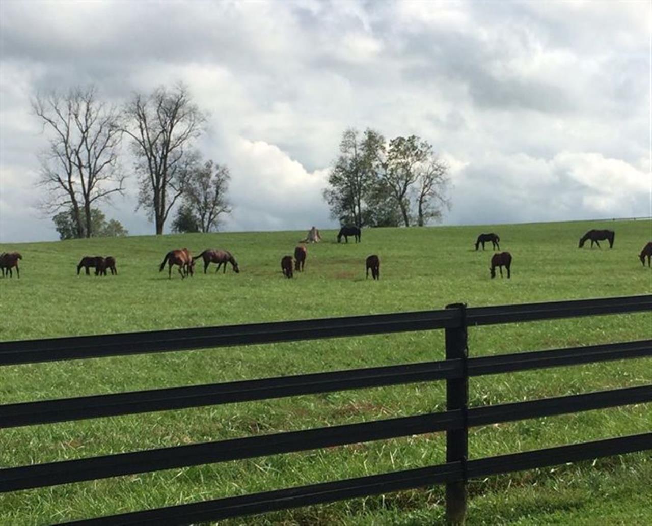 A bluegrass morning!