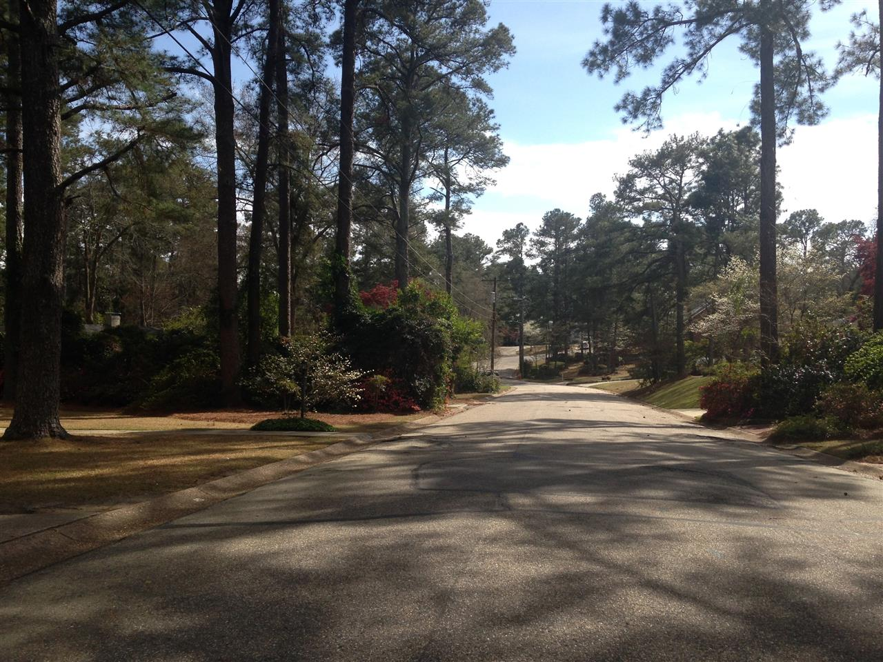 Forest Lakes subdivision scene in Fayetteville, North Carolina.  Submitted by Judy Capps.
