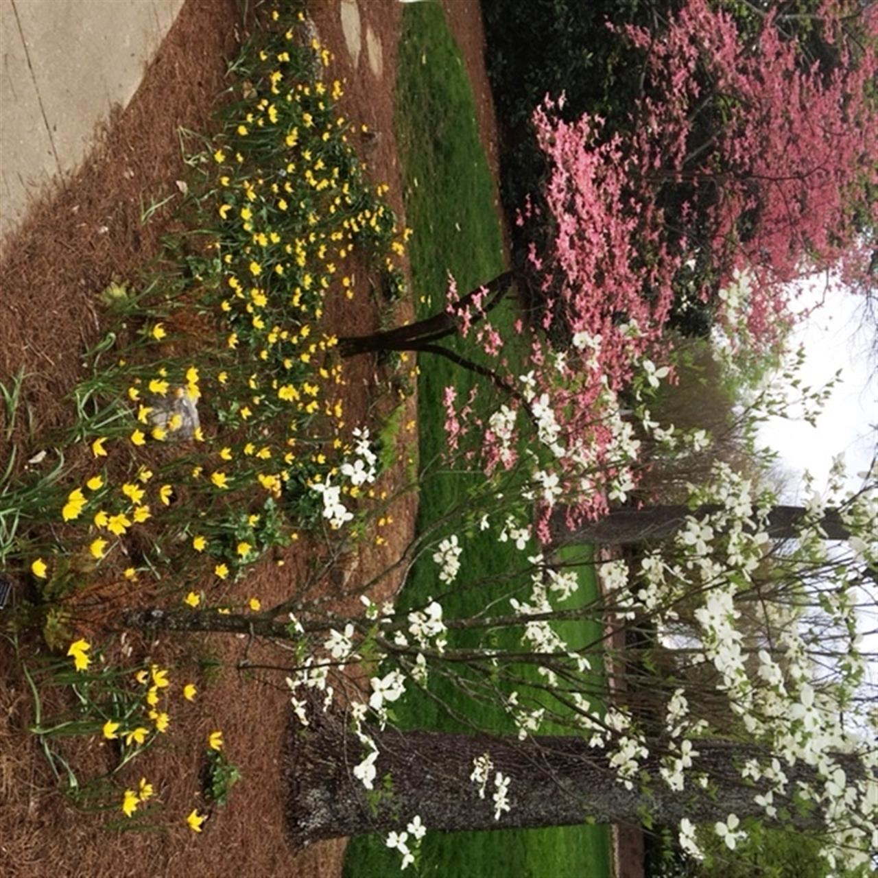 Tulips and Dogwoods in Bloom at Cheekwood #leadingRElocal #Cheekwood Botanical Gardens #Nashville, TN