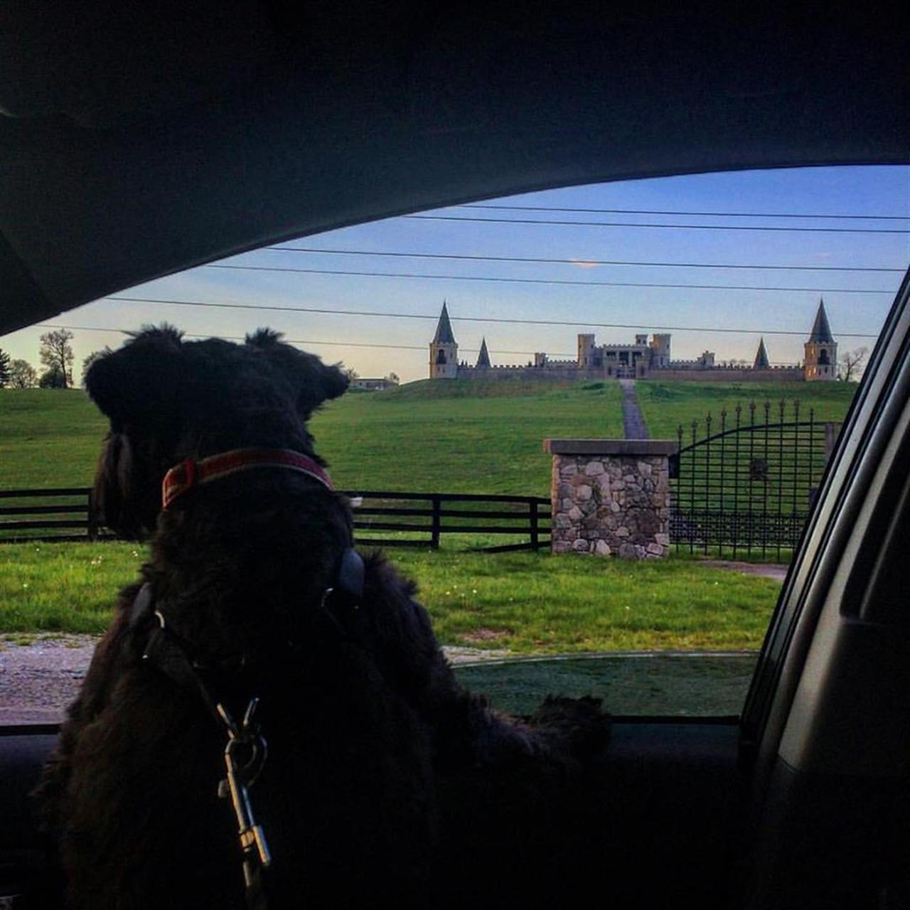 Puppy looking at the famous Castle Post in Versailles, KY