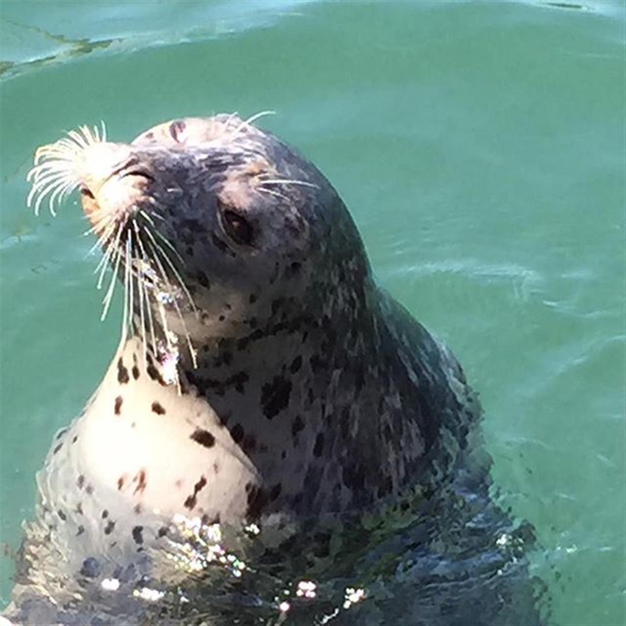 #lunch companion #my backyard #oakbay #oakbaymarina #LeadingRElocal #realestate #realtorlife #realestateagent #seals