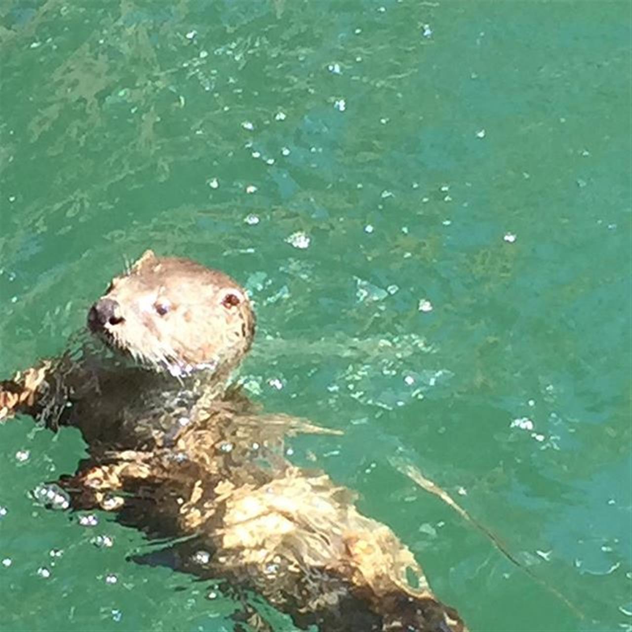#otters #nofilter #longweekend #LeadingRElocal #realtorlife #realestateagent #realtor #oakbay #oakbaymarina