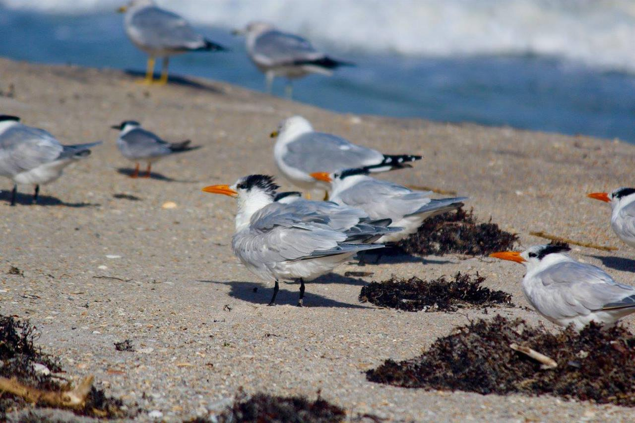 Seagulls enjoying summertime in Sebastian, FL.