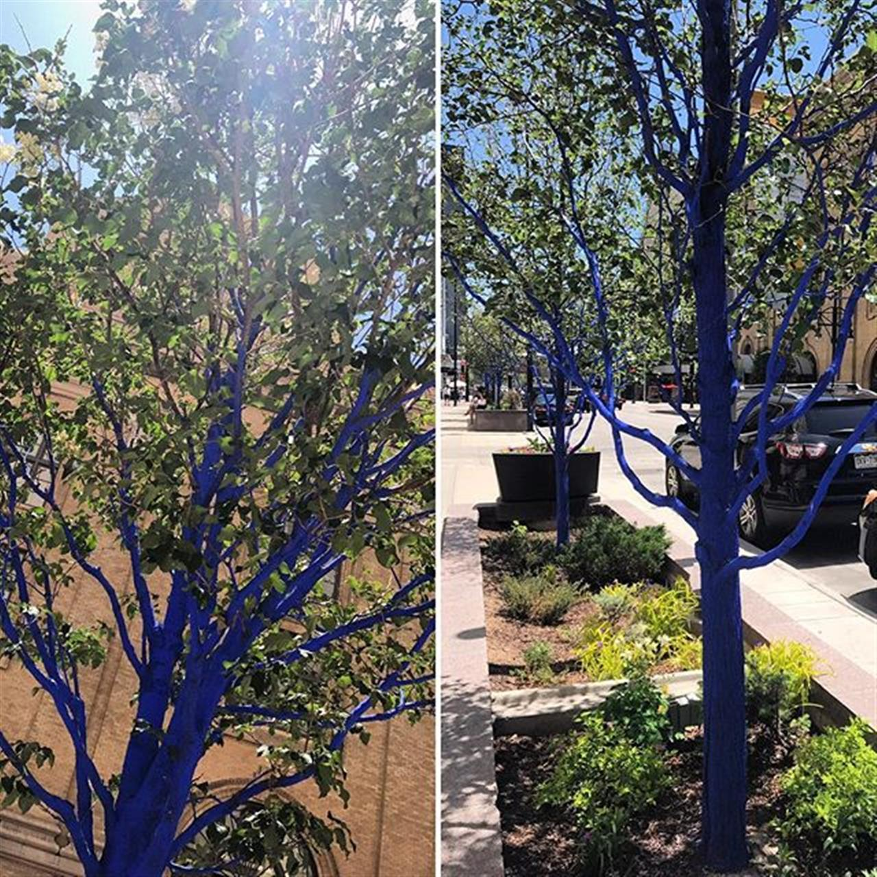 Have you spied the blue trees dotted around downtown yet?  #bluetrees #bluetreeproject #nontoxic #konstantindimopoulos #goexploredenver #leadingrelocal