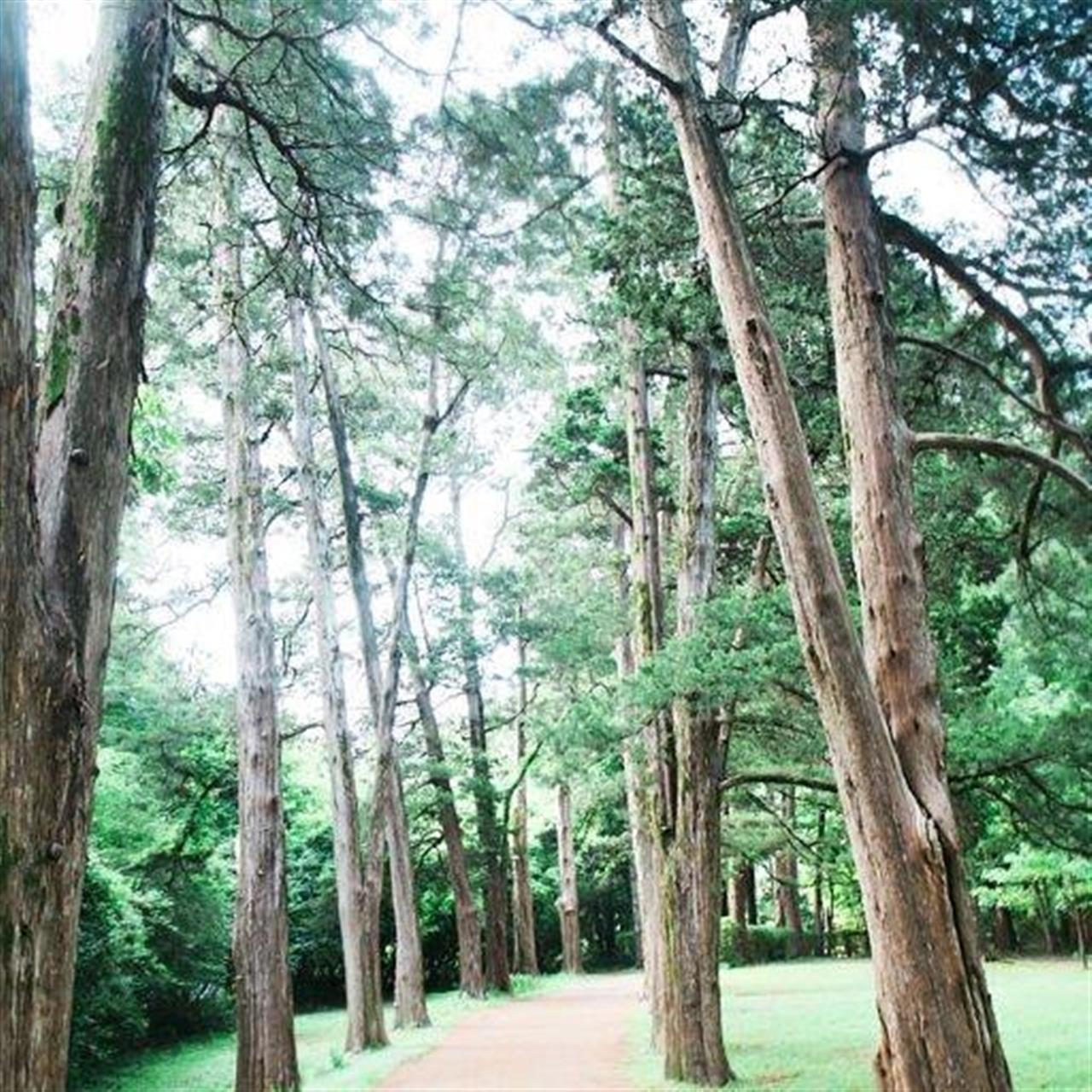 Beautiful Rowan Oak! #makeoxfordhome #rowanoak #oxfordms #cryeleikerealtors #leadingrelocal